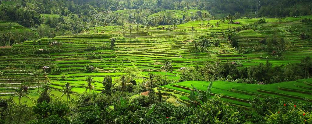 Back to Bali again